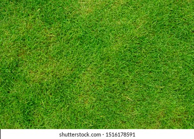 Green grass background texture from top view in football field