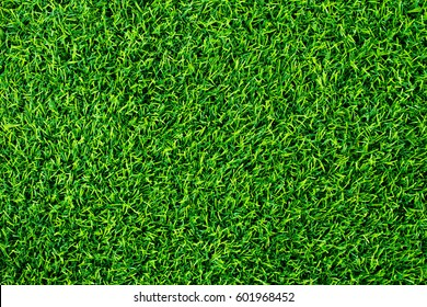 Green grass background texture. top view.