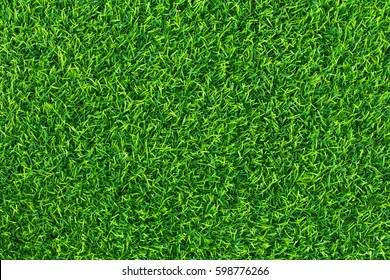 Green grass background texture .top view.