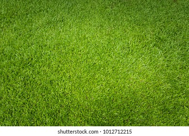 Green grass background and textured, Top view and detail of turf floor at soccer field