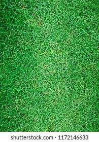 Green grass background turf grass surface abstract