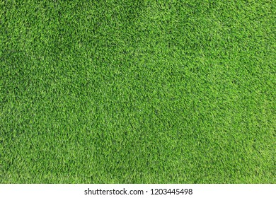 Green Grass Background View of Natural Park Field. Green Grass Growing on Outdoor Empty Lawn, Vibrant Summer Nature View. Bright Colorful Green Grass Pattern on Sunny Summer Day