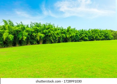 Green grass and bamboo forest in the city park.