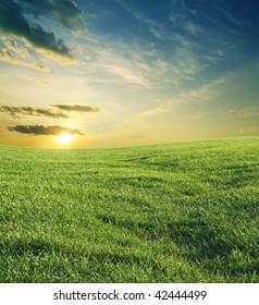 green grass and beautiful sunset