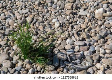 Green grass between round pebbles