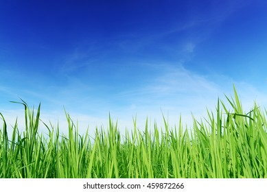 Green grass with blue sky background, from front eye view.