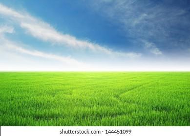 green grass blue sky cloud cloudy landscape background