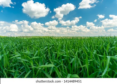 Green grass and blue sky with clouds. Beautiful landscape.
