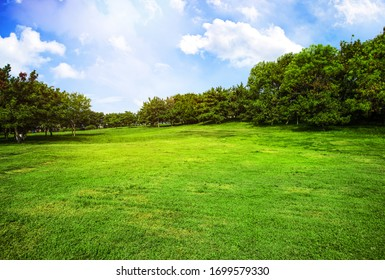 Green grass and blue sky on a golf field