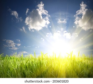 green grass and blue sky over the sun rise