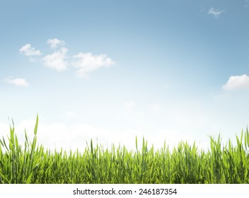 Green grass and blue sky texture.