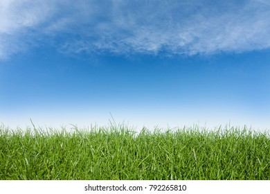 Green grass and blue sky,great as a background