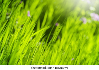 Green grass with blurry flowers in the background