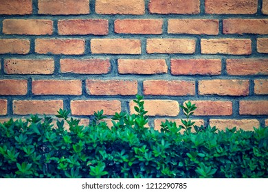 green grass and brick wall for the textured combined background or for wallpaper