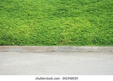 green grass cement ground