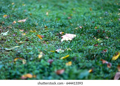 Green grass covered with autumn yellow leaves