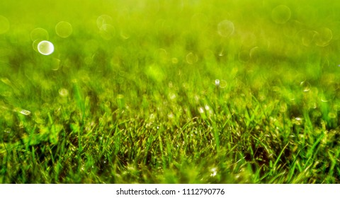 green grass covered with dew