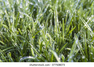 Green grass covered in ice