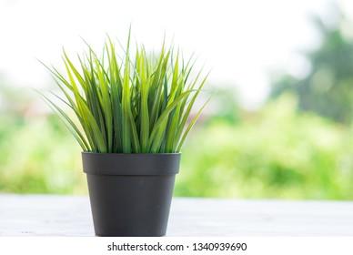 green grass in dark flowerpot on nature background
