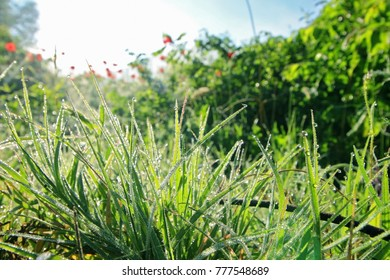 Green  grass with dew drops and blue sky