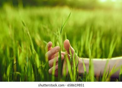 Green grass, dew on grass, hand touches grass.
