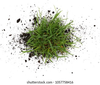 Green grass with dirt, soil isolated on white background and texture, top view