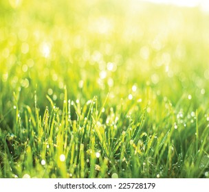 Green grass with drops at sunrise light.