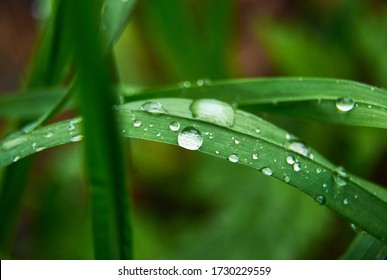 green grass with drops of water after rain