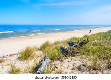 Green grass and dry tree trunks sand dune on coast of Baltic Sea on Lubiatowo beach, Poland