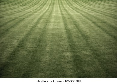Green Grass Field