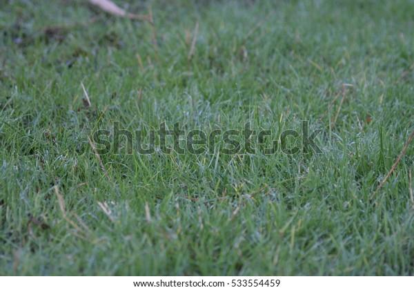 Green grass field.