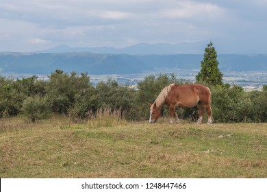 Green grass field with Aso mountain background and horse, Aso, Kumamoto, Kyushu, Japan