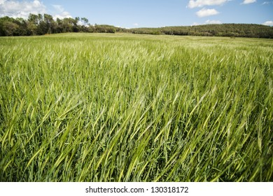 green grass field with blue cloudy sky