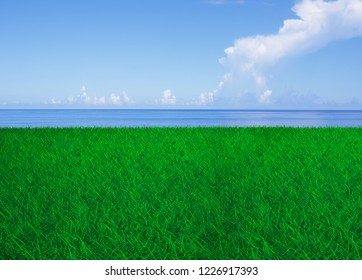 Green grass field with blue sky, white clouds and sea.