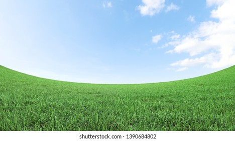 green grass field and blue sky 3D rendering with copy space.Fisheye lens effect