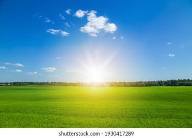 Green grass field and blue sky. Bright sunny summer day. Idyllic landscape.