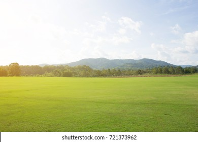 green grass field and blue sky.