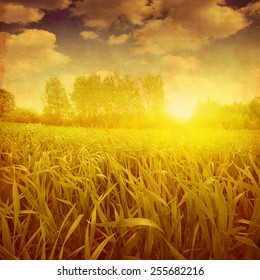 Green grass field during sunset. Grunge style photo.