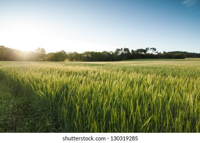 Green grass field landscape sunset