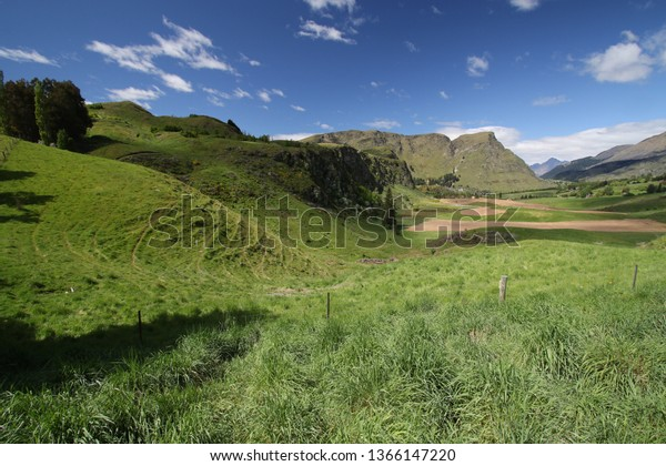 Green grass and field on a bright sunny day in front of mountain scenary, New Zealand