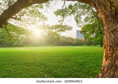 Green grass field in park at city center with business buildings in Bangkok, Thailand.