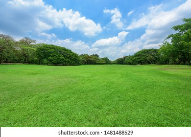 Green grass field in park at city center.