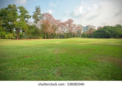 Green grass field in park at city center with blue sky