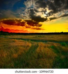 green grass field at the sunset