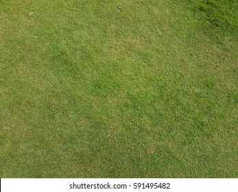 Green grass field texture as background with empty space