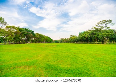 Green grass field with tree public park, nature landscape