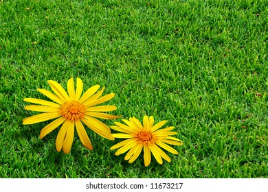 Green grass field with two yellow daisies