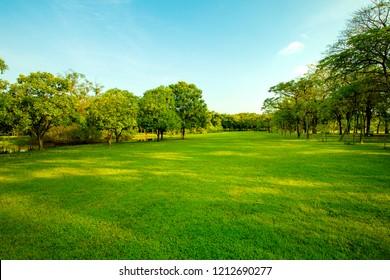 green grass field  in urban public park
