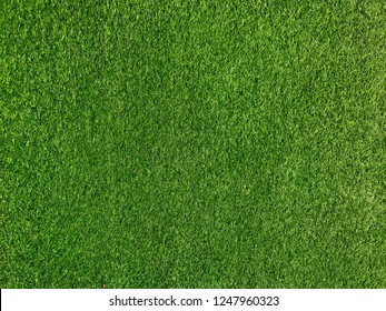green grass floor texture Ideal for use in the design background. top view.