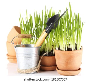Green grass in flowerpots and gardening tools, isolated on white